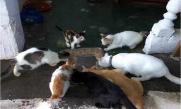 Managing Malaysia's stray population