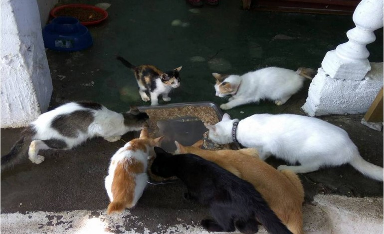 Managing Malaysia's stray population