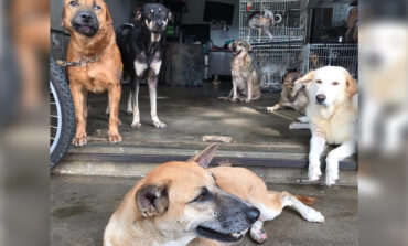 Adoption centre continues taking care of strays during MCO